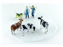 Venganza de las vacas Imagen de archivo libre de regalías