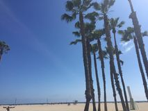 Venice beach Cali royalty free stock photo