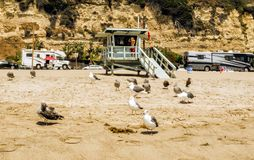 Venice Beach Lifeguard Tower with many seagulls on the 13th of August, 2017 - Venice Beach, Los Angeles, LA, California, CA Royalty Free Stock Photo