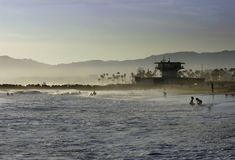 Venice beach waterline. A view of Venice Beach and Los Angeles nearing sunset with children playing the waves and silhouetted palm trees Royalty Free Stock Photos
