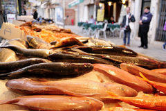 Venice fish market. Showing fresh fish available for purchase Royalty Free Stock Photography