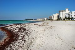 Venice Florida. Venice Beach showing some erosion with condo's in back Royalty Free Stock Photo