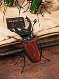Venice - Glass insects Royalty Free Stock Images