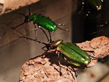 Venice - Glass insects Royalty Free Stock Photo