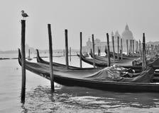 Venice Gondole. Gondolas in Venice near st. Marcs square royalty free stock images