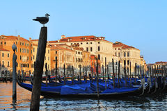 Venice Italy Cityscape Royalty Free Stock Images