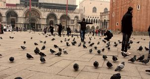 VENICE, ITALY - January 2014: People walking and pigeons in the square in slow motion stock video