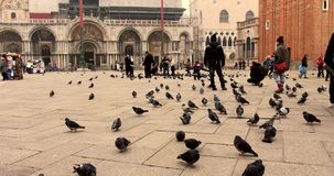 VENICE, ITALY - January 2014: People walking and pigeons in the square in slow motion stock footage