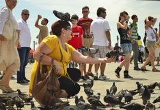 VENICE, ITALY- JUNE 30, 2011: Woman tourist holding pigeons in square San Marco royalty free stock photography