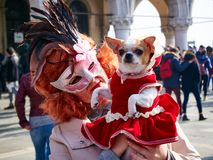 Venice, Italy - March 2, 2019 Dog pet and Owner dressed with costumes during Carnival of Venice royalty free stock photos