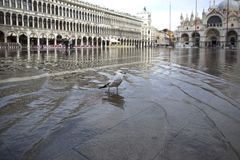 Free Venice, Italy - November 27, 2018: High Water On St. Mark`s Square In Venice. St. Marks Square Piazza San Marco During Flood Royalty Free Stock Image - 133522126