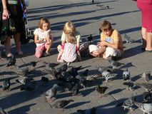 Children and pigeons on St Mark`s square royalty free stock photos