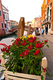 Venice Italy red chili pepper plant Royalty Free Stock Photography
