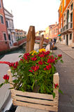 Venice Italy red chili pepper plant Stock Photography