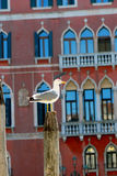 Seagull. Venice - Italy, Seagull. architecture background Stock Images