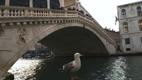 Venice, Italy a seagull standing under Rialto Bridge. View of Grand Canal with seagull standing on a wooden mooring pile by passing boats, gondolas and tourists stock video