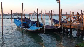 Gondolas at berth of the bay of San Marco. Venice stock footage