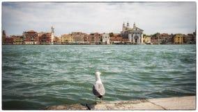 Venice Italy. Venice Venezia Italy Channel Canal Giudecca royalty free stock photography
