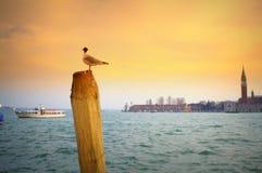 Venice lagoon view,Italy Royalty Free Stock Photo