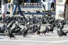 Venice, Piazza San Marco with pigeons stock photo