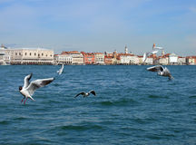 Venice from the sea with flying seaguls Stock Photo