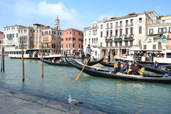 Venice seagull standing at seafront and intensive gondolas and ferries traffic on his background Stock Photography
