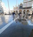 VENICE, VE, ITALY - January 31, 2015: Saint Mark's Basilica duri Stock Images
