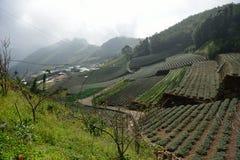 Venido a la granja del té rápidamente Fotos de archivo libres de regalías