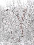 Venir de la saison froide de l'année La première neige est tombée, couvrant tout autour image stock