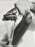 Venom extraction Stock Photography