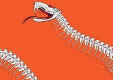 Venomous snake. Vector outline background with the venomous snake Royalty Free Stock Image