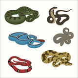 Venomous snake vector cartoon set. Flat style royalty free illustration