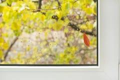 Venster/de herfst Stock Afbeeldingen