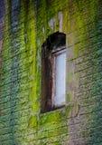 Venster in een muur met mos wordt behandeld dat Royalty-vrije Stock Foto's