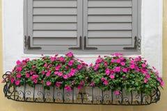 venster en bloemen Royalty-vrije Stock Fotografie
