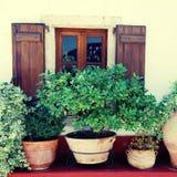 Venster en bloempotten (Kreta, Griekenland) Stock Afbeeldingen