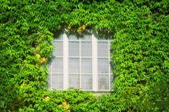 Venster in groene bladeren Stock Foto