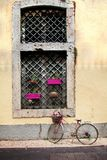 Venster met bloempotten die wordt verfraaid stock fotografie