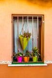 Venster met fuchsiakleurig, oranje en groene potten van bloemen Stock Afbeeldingen