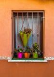 Venster met fuchsiakleurig, oranje en groene potten van bloemen Royalty-vrije Stock Fotografie