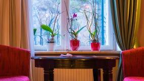 Venster met gordijnen en bloemen en rode bank stock afbeeldingen