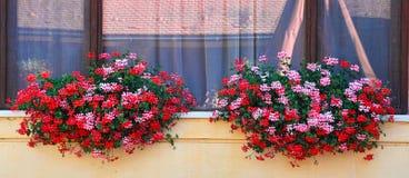 Venster met verse bloemen wordt ontworpen die Stock Afbeelding