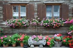Vensters en bloemen Stock Foto's