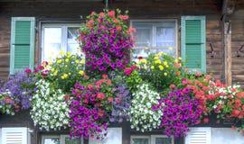 Vensters met bloemen Royalty-vrije Stock Afbeelding