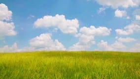 Vent au-dessus de champ d'herbe banque de vidéos