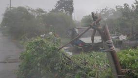 Vent et rafales lourds des arbres de soufflement de pluie pendant un ouragan clips vidéos