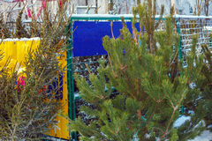 Venta al aire libre de los árboles de navidad de Frsh Imágenes de archivo libres de regalías