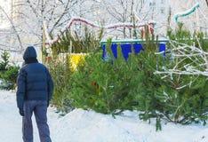 Venta al aire libre de los árboles de navidad de Frsh Foto de archivo