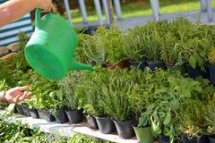 Venta de hierbas en mercados florales Fotografía de archivo