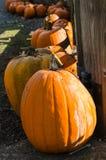 Venta de la calabaza de la calabaza Imagen de archivo libre de regalías